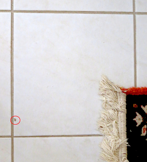 See the small circled area where the white tile is chipped? This can be repaired in less than an hour! Photo Credit: Andrew Vous