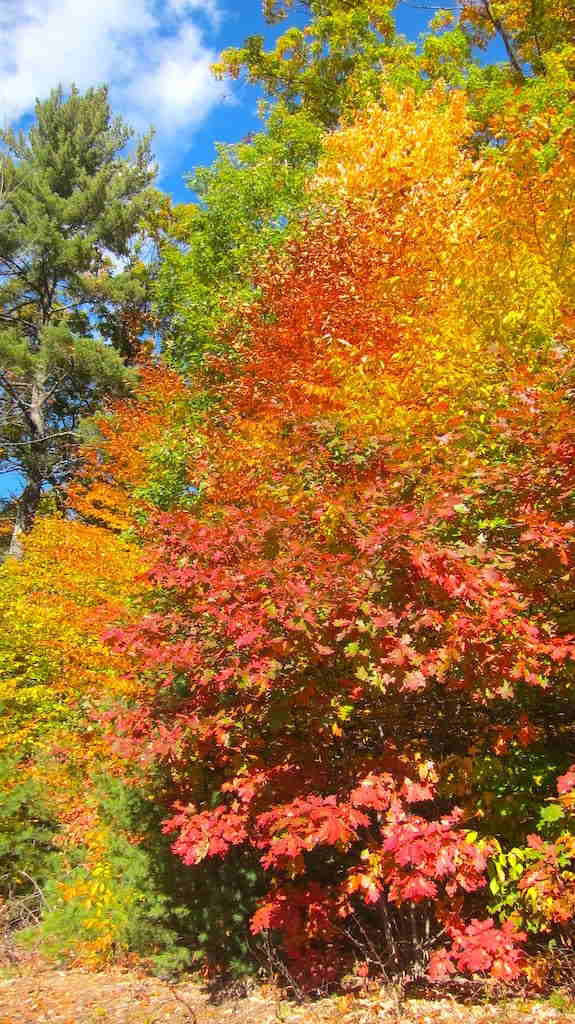 fall color new hampshire